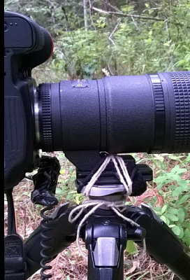 Never, ever, ever, leave your tripod home again!