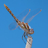 Insects image library