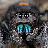 Spiders & other Arachnids image library